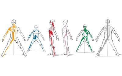 Infographie: les chaînes musculaires selon la méthode Busquet